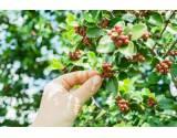 Susedské spory: Plody zo susednej záhrady a obrana proti nepríjemným zásahom do vlastníckeho práva